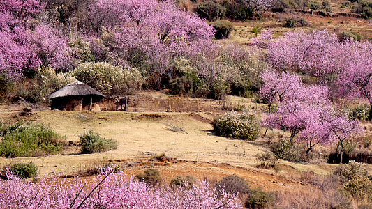 aerial view photo of purple trees