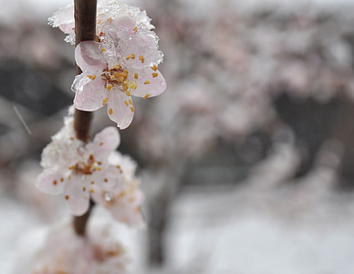 close up photo of cherry blossoms
