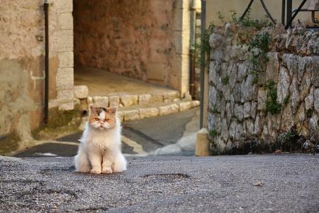 medium-coated beige cat