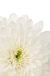 close shot white flower