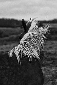 horse leaning back on horizon