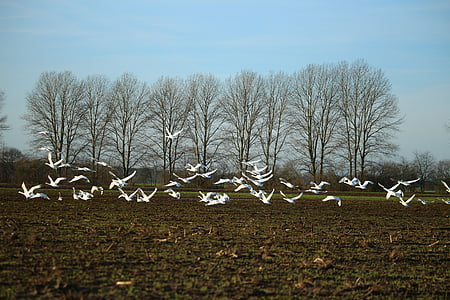 flock of birds flying on brown field