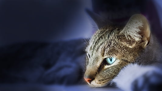 closeup photo of brown blue-eyes tabby cat