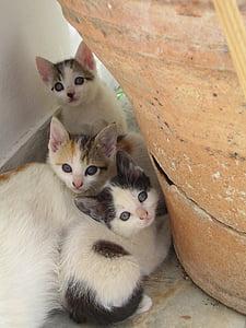 several white kittens
