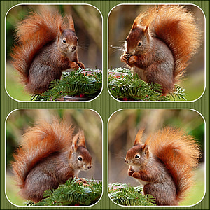 brown squirrel collage