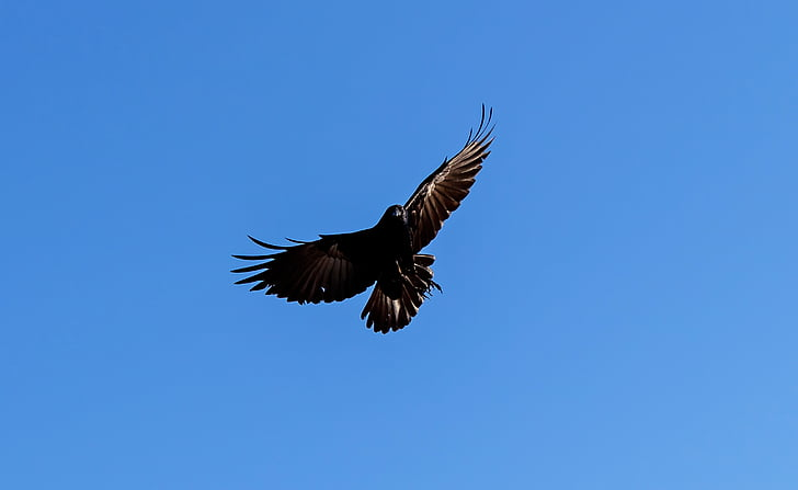 closeup photo of flying bird