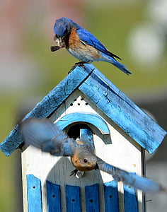 shallow focus photo of blue birds on birdhouse