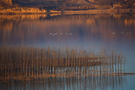 flock of birds flying above large calm body of water