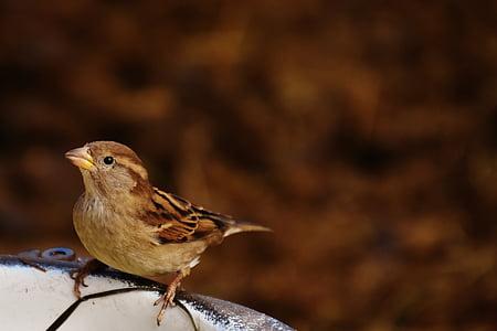 gray and brown bird perching on birdbath