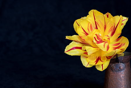 yellow and red petaled flower on brown vase