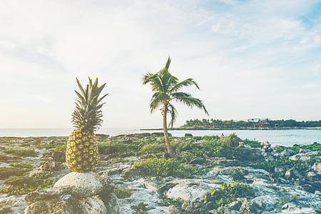 pineapple fruit on stone