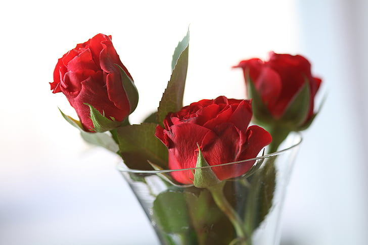 selective focus photo of red rose arrangement