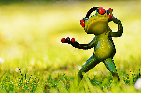 shallow focus photography of standing red eyed tree frog