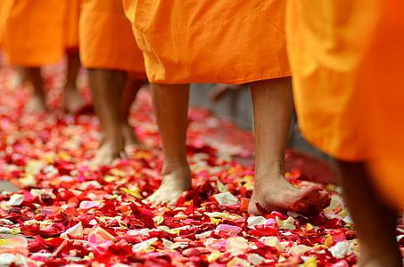 person walking on flower petals