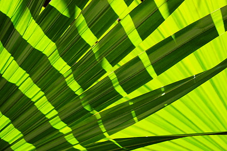 green and black digital wallpaper