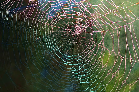wildlife photography of spider web