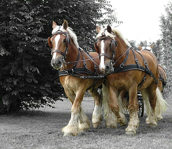 four brown stallions walking on field during daytime