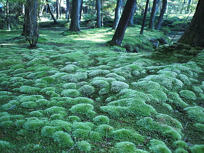 green moss growing near trees