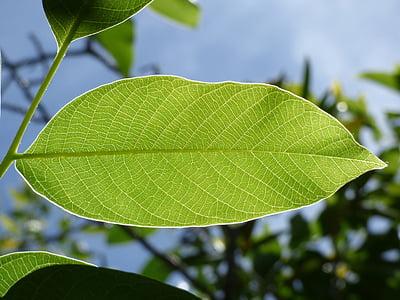 photography green leaf plant