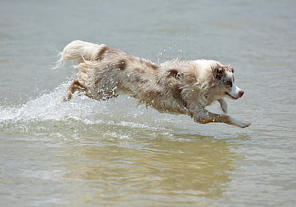 brown dog running over water