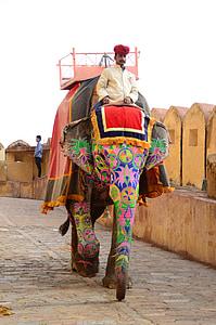man riding on elephant at daytime
