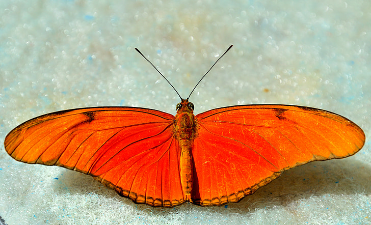 orange and red butterfly on grey surface in close-up photography