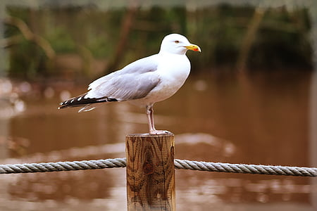 white seagull perch on brown wooden post