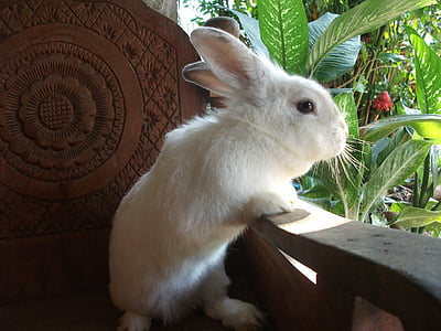 white rabbit leaning on wooden armchair
