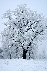 white tree covered with snow