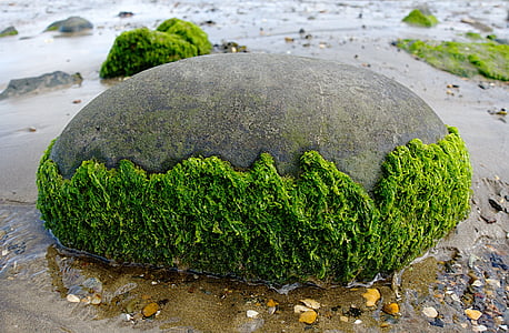 gray stone with half-filled moss
