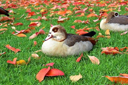 duck on grass beside leaves