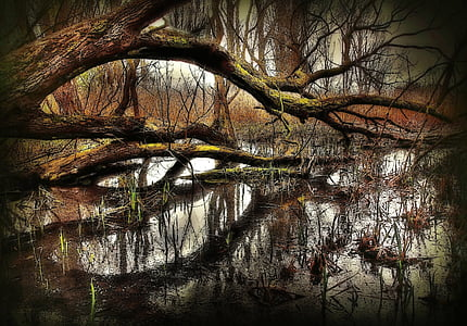 landscape photo of tree on body of water