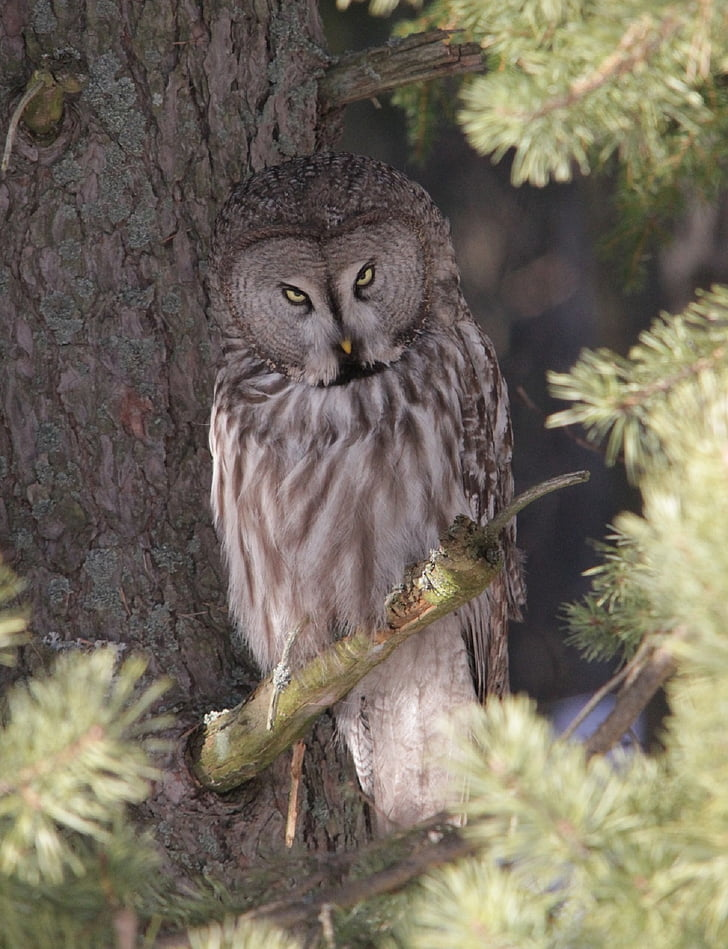 brown owl perching on tree