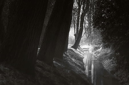 grayscale shot of forest