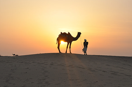 silhouette photography of man holding camel during golden hour
