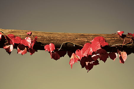 red leaves on wooden lumber