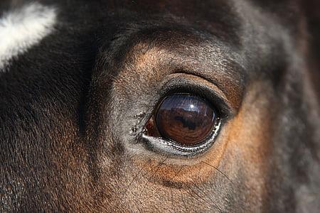 selective focus photography of animal's eye