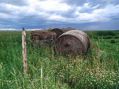 hay and flowers under dark clouds