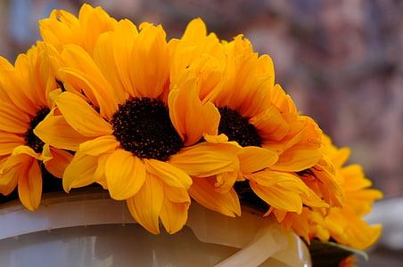 yellow sunflowers on bucket