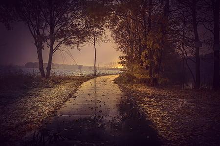 black road between trees and leaves