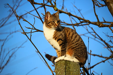 brown and white tabby cat standing on pole