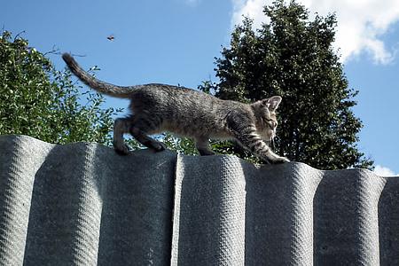 gray tabby kitten walking on gray fence