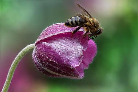 bee on top purple petal flower closeup photography