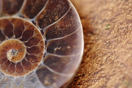close up photography of brown snail