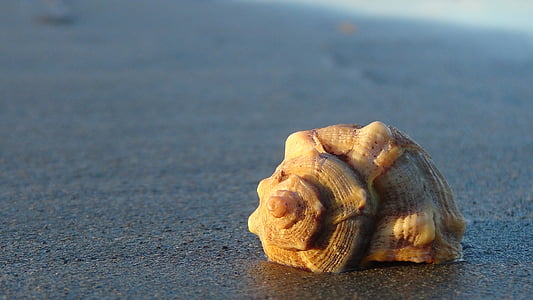 beige conch shell at beach sand