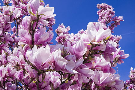 white and purple petal flowers under blue sky