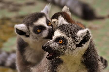 two meerkat during daytime
