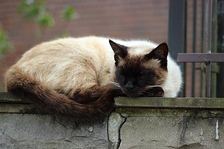 Siamese cat sleeping on gray concrete pavement