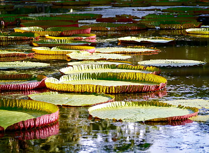 shallow focus photo of lily pads