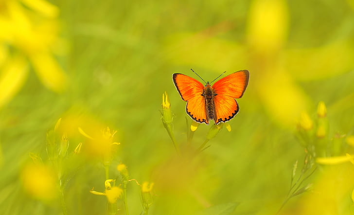 shallow focus photography of orange and black butterfly